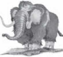 Woolly mammoths were snap-frozen during the Flood catastrophe. This is contradicted by their geological setting.
