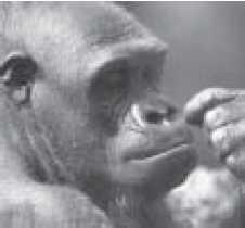 Some evolutionists also miss the main point, by protesting that they don t believe that we descended from apes, but that apes and humans share a common ancestor. The evolutionary paleontologist G.