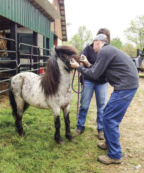 Camp Mohaven Equine Program Makes a Difference Mention Camp Mohaven to members around Ohio and almost everyone will probably envision summer camp adventures past and present.