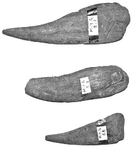 moore and win. the gold coast: suvannabhumi? 225 Fig. 14. Stone tools from Mayangon; top to bottom 15.5, 13.0, 10.2 cm in length. eral straight horizontal lines (Fig. 16).