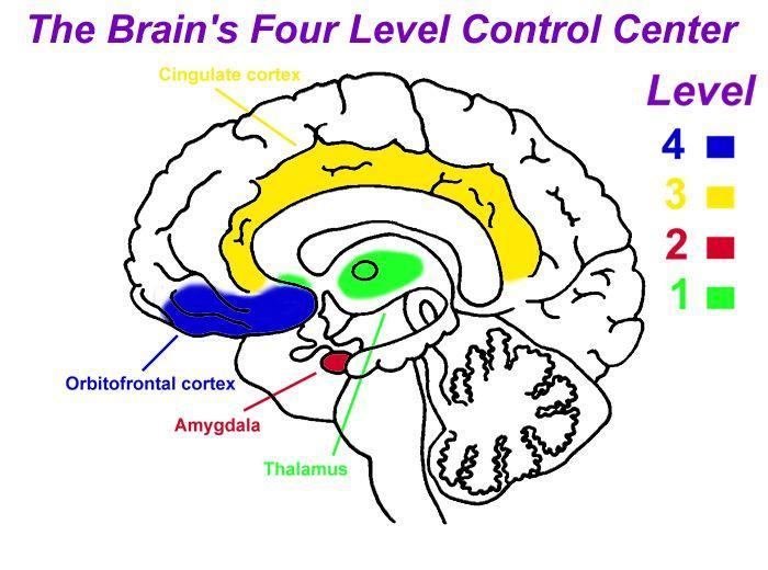 Appendices Appendix D: The brain s four-level control centre (The Life Model, 2004) A summary of the levels of the emotional/social processing system, by Karl D. Lehman and Charlotte E.T. Lehman, follows.