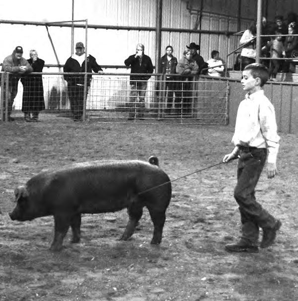 Landry Day, Comanche was the recipient of the Market Swine Junior Showmanship Belt Buckle, donated by Jimmy and Karen Mahan, in honor of Garth Priddy, former Ag teacher at DeLeon High School.