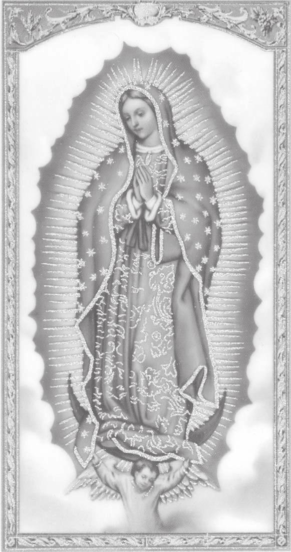 Our Lady of Guadalupe Catholic Church 409 West Krezdorn Rectory Seguin, Texas 78155-4429 Fax email: olgseg@satx.rr.com School 830-379-4338 830-303-1002 830-379-2818 Pastor Rev.