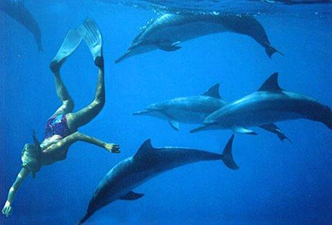This retreat offers the opportunity to meet, communicate, swim, and heal with the Hawaiian Whales and Dolphins!
