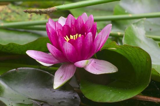The ubiquitous lotus, the basis of virtually all ornament in India,