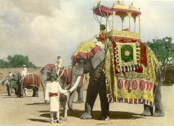 Sacred Animals and Ahimsa The majestic quality of this can be traced back to ancient India when owning elephants was a royal
