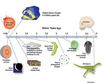 Evolution Time line Simple Cells Complex Cells Multicellular Life Simple Animals