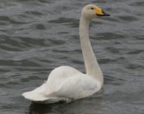 Example ~ Emily, Adrienne, Iris, Alicia, Tori are all swans, all bug-eaters, all female, all white, all migratory.