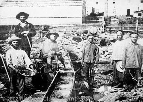 Chinese men labor for white California miners Before 1850, there were fewer than 1,000 Chinese in the U.S.; by 1852 there were 20,000 in California alone.