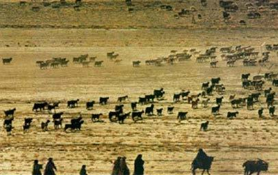Review of Pastoralists (Pastoralism vs.