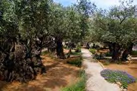 GARDEN OF GETHSEMANE CHURCH OF THE NATIVITY DAY 6: THURSDAY, FEBRUARY 22, 2018 - MOUNT OF OLIVES / PALM SUNDAY ROAD / GARDEN OF GETHSEMANE / WESTERN WALL / HOLY SEPULCHER / BETHLEHEM (CHURCH OF THE