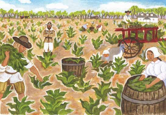 Everywhere in the colony, people started planting tobacco even in the streets and in graveyards. Soon the colony was shipping thousands of pounds of Virginia tobacco to England.