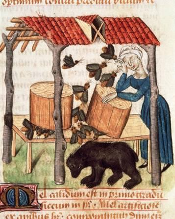 Gathering Honey The women shown here is harvesting honey from beehives in the 15th century. During the Middle Ages, families that had the resources to do so often kept bees.